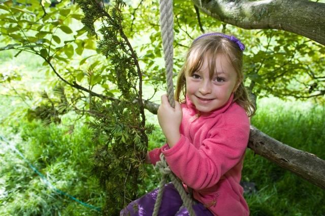 Tree swings